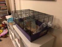 Hamsters x2 & Cage Free to collector
