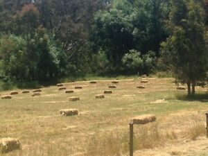 Meadow hay bales - new season ready now Hahndorf Mount Barker Area Preview
