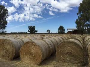 Rye and Wheat round hay bales (500) Cobram Moira Area Preview