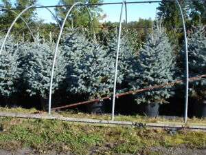 Huge selection of plants, over 1000 varieties including cedars,