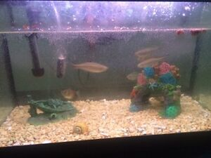 Assorted Fresh Water Fish $2 to $10