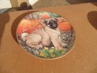 Danbury Mint Collection Pug Plate (Called = Pumpkin Pug) in as New Condition.