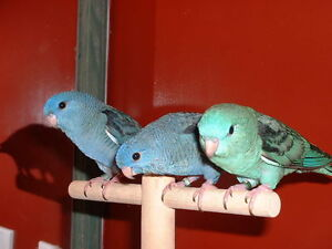 ❤★❤ Adorable,Tame LINNIE Babies With CAGE❤★❤