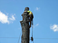 Tree Removal and Trimming 519-990-1627
