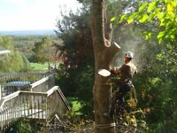 GROUND TO CROWN TREE REMOVAL * FULLY INSURED * FREE ESTIMATES