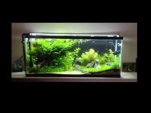 50 Gallon fish tank MINT, New LED's, FX5, Heater & access