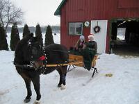 Cadillac Cart Pony