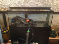 70 Gallon Fish thank w/Cabinet Stand