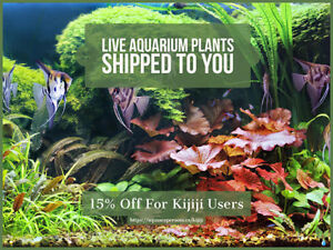 Live Aquarium Plants Shipped To You