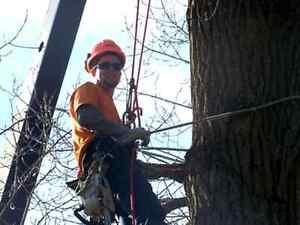 Essouchage - Emondage / Tree & Branch Removal - Maintenance
