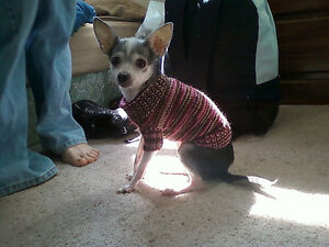 Hand Knit Dog Sweaters, hats etc