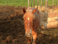 Filly and horse colt for sale