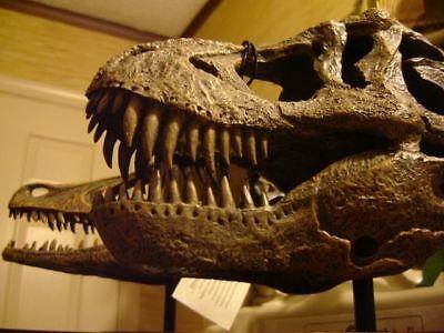 Tyrannosaurus rex T-rex Dinosaur Skull Museum Model Replica Tooth Fossil Resin - T Rex Model