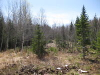 1 Acre lot in Hampton Area - Very little preparation needed