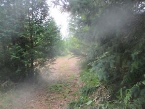5 Acre Lot with Woods, Clearing and Beaver Pond 20K N. Shelburne