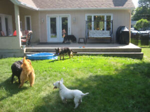 Pension pour animaux à St-Jean-sur-Richelieu ( garderie animale)