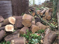 FREE sycamore wood cut to manageable sizes-collection only