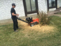 Stump Grinding Tree Hedge Pruning Cutting Trimming Removal
