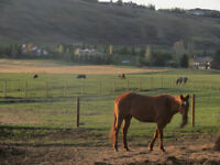 GREAT LOCATION, GREAT PEOPLE - HORSE BOARDING