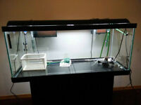 75 gallon aquarium with all equipment and stand