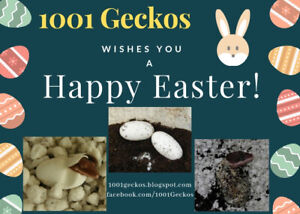 Happy Easter from 1001 Geckos!