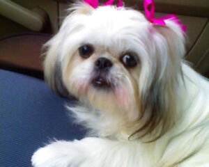 HOLIDAY DOG GROOMING...Save 20% off your current groomer's bill Kingston Kingston Area image 6