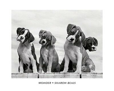 Wonder Sharon Beals Puppy Black And White 16X20 Cute Puppies Poster Art Print