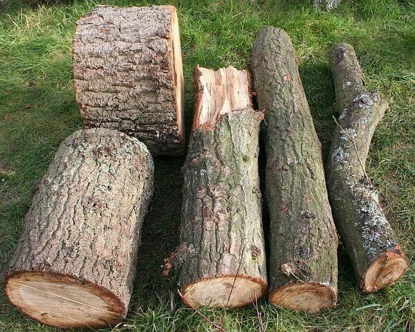 Oak Wood Logs ~ Oak and ash tree logs for free in sparkhill west