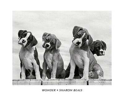 Dog Art Print   Wonder By Sharon Beals Puppies Cute Dogs Animal Poster 16X20