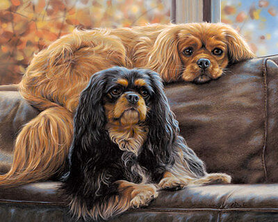 Cavalier King Charles Spaniel fine art dog print by Paul Doyle. COUCH KINGS
