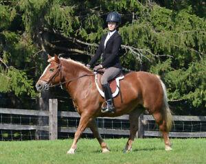 English riding lessons Kitchener / Waterloo Kitchener Area image 1