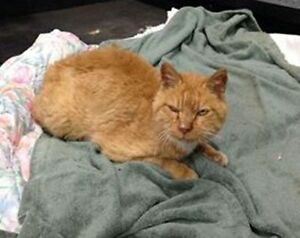 KLAWS: Found Nov 28th, Halter Rd at Hwy 7 in Lindsay. Friendly++