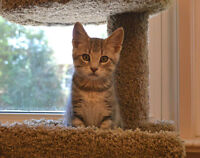 5 Month Rescue Kittens - Spayed/Neutered/Vaccinated