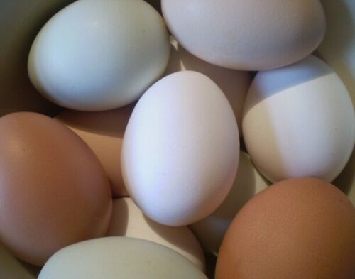 One Dozen Blown Out Large Green Blue White Brown Chicken Eggs Pysanky Easter