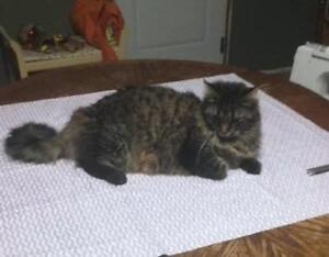 """KLAWS: LOST """"CLEO"""" May 5 Hwy 35/Naylor's Rd, Cameron area"""