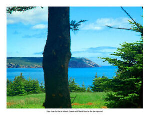 Available December-May St. John's Newfoundland image 10