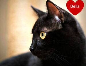 MEET BEAUTIFUL 'BELLA'...ADORABLE,ADOPTABLE...FIXED/SHOTS