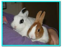 Lovely bonded rabbits plus hutch for sale