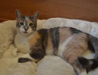 Female Rescue Cat - Very Affectionate -Spayed/Vaccinated/Healthy