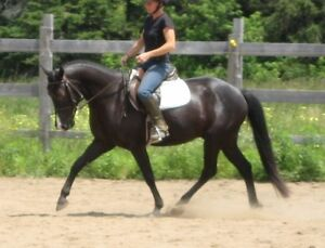 Large Pony available for board/part board
