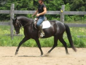 Large Pony available for board/part-board