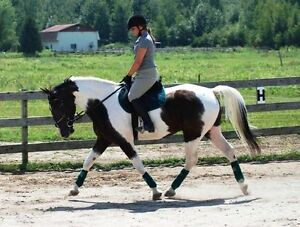 Horse Training & Riding Lessons - I travel to your barn!