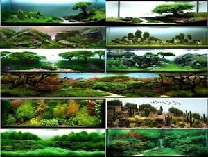 belles plantes d'aquarium d'eau douce, et... Québec City Québec image 5