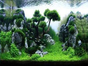 belles plantes d'aquarium d'eau douce, et... Québec City Québec image 7