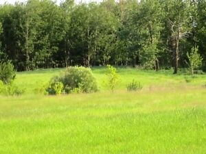 REDUCED! 4.99 acres for your dream home in Beaver County Strathcona County Edmonton Area image 1
