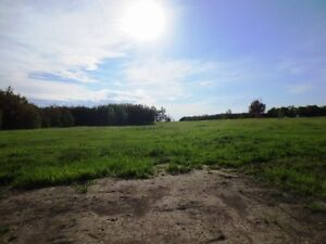 REDUCED! 4.99 acres for your dream home in Beaver County Strathcona County Edmonton Area image 5