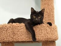 Female Rescue Kitten - 16 Weeks - Spayed/Vaccinated/Dewormed