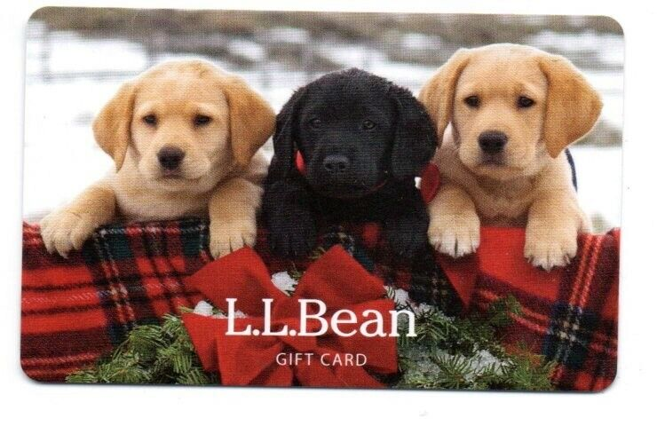 L.L. Bean Three Cute Dogs Puppies Holiday Card Gift Card No $ Value Collectible