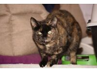 'AMBER' Female cat needing a loving new home, is at Holbrook Animal Rescue in Horsham