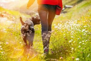 Professional Dog Walking Service You Can Trust!
